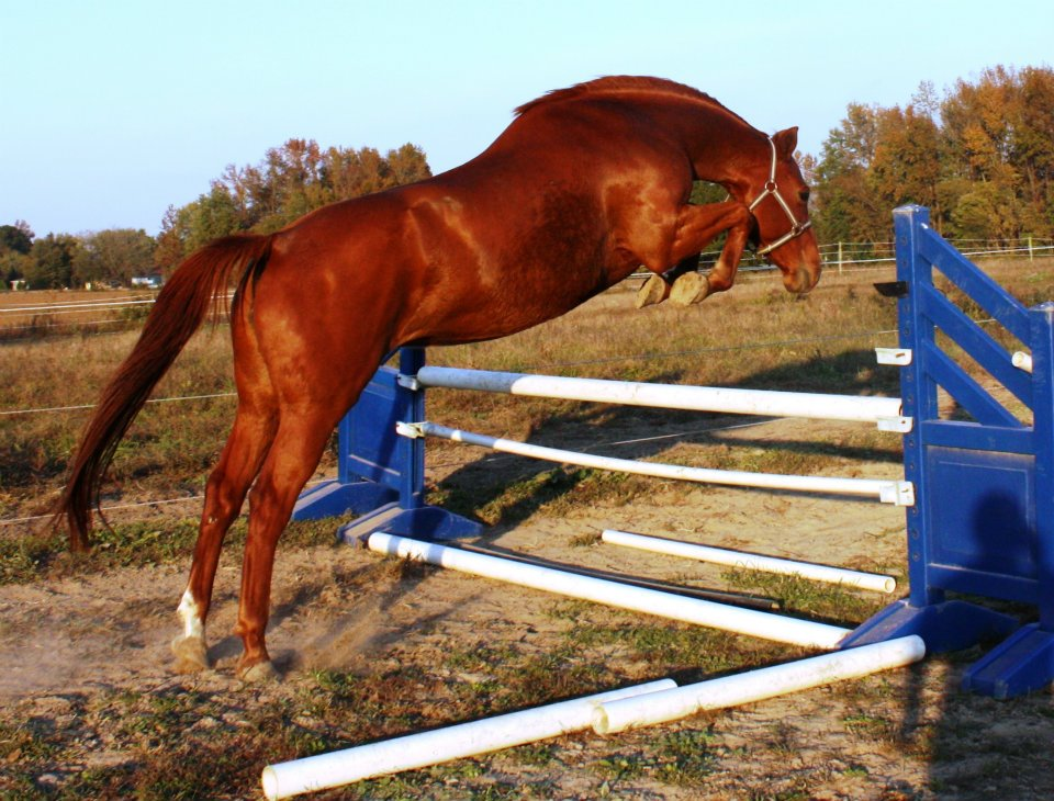 Haven Sporthorses, Alachua, FL, 32615, United States